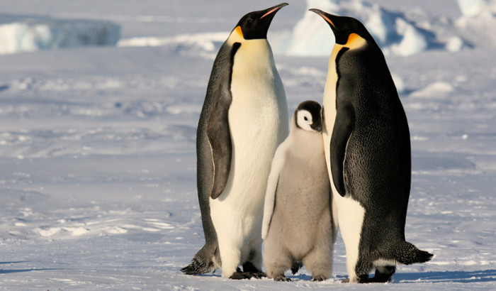 Our Antarctica photography guide