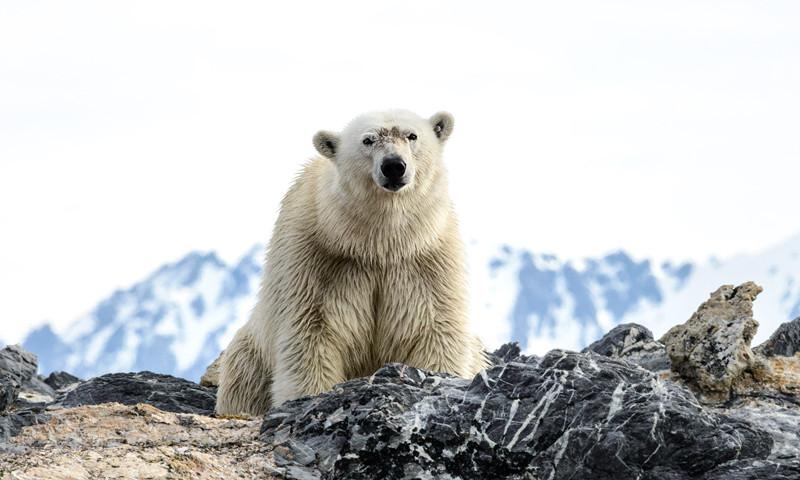 allan hoopkins 2 800x480 penguins & polar bears same same but different peregrine adventures