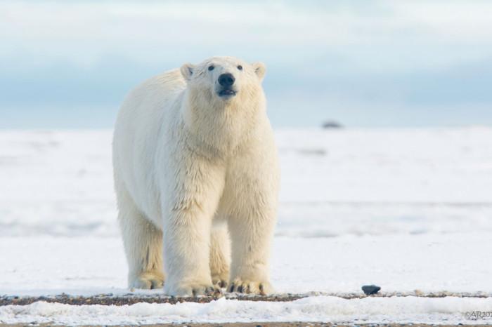 Penguins & polar bears: Same same but different