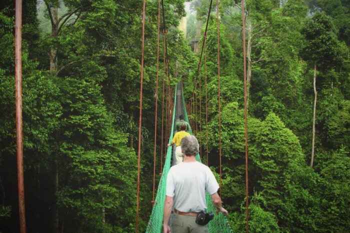 7 amazing things to do in Borneo