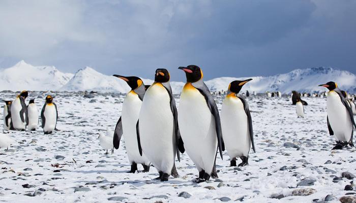 bucket-list---antarctic-bound