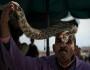 Snake charmer, Marrakech