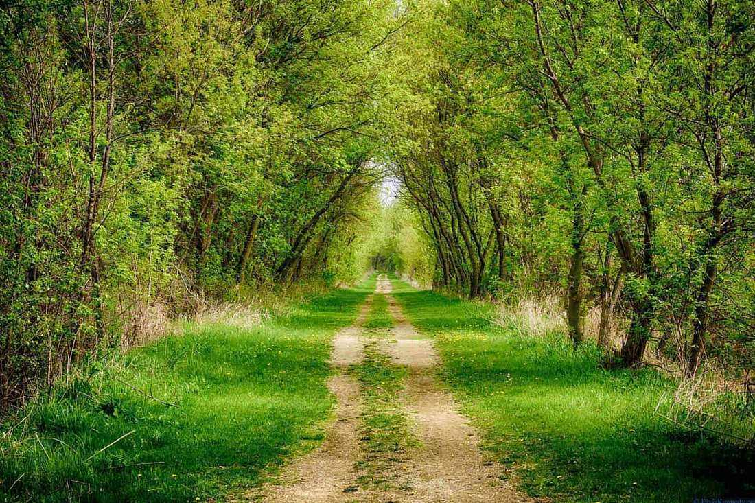 Walking trail in country