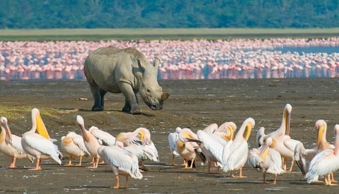 africa_rhino