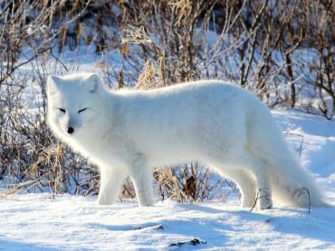 arctic---emma