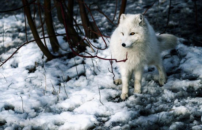 arctic---garret-voight