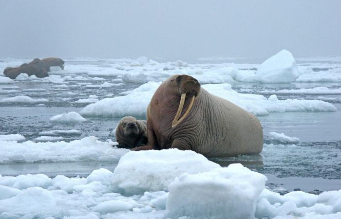 arctic---us-geological-survey