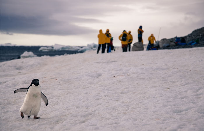 Polar-penguins-in-Antarctica---Lucy-Piper-2