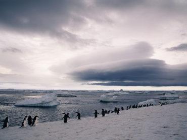 Polar-penguins-in-Antarctica---Lucy-Piper