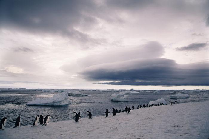 Antarctica vs The Arctic: how to choose your polar tour