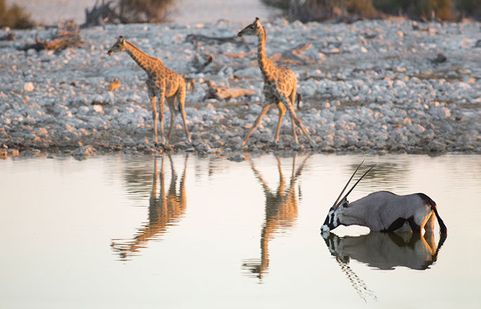 ben-mcrae-giraffe-at-water-hole-africa