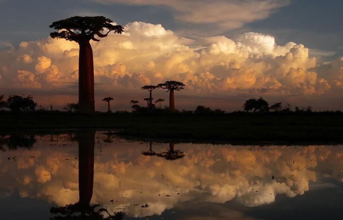 madagascar-baobab-trees-frank-vassen