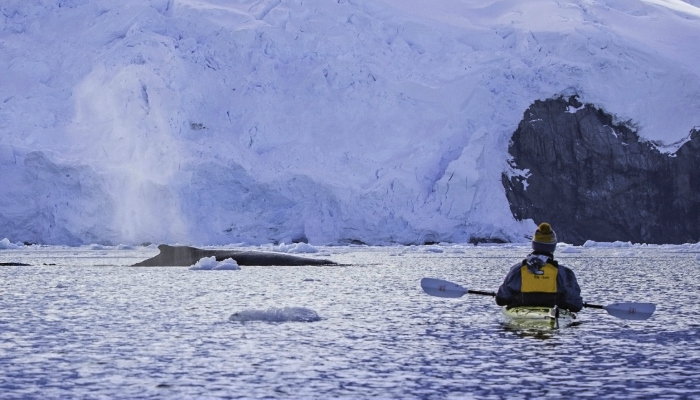 Sea kayaking with whales in Antarctica