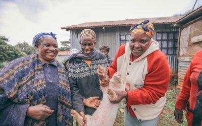 Sustainable pig farming in Kenya