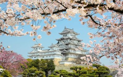 Himeji Castle with cherry blossom in Japan