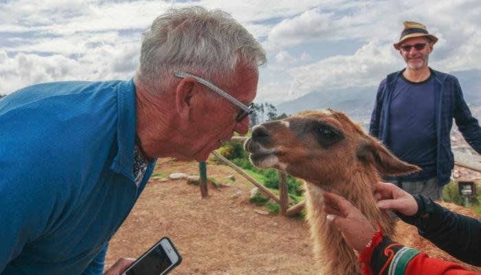 traveller and llama in Peru
