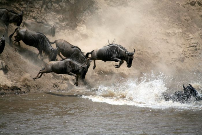 Our guide to East Africa's Wildebeest Migration