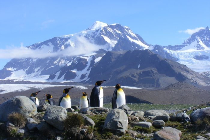 Why South Georgia should be part of your Antarctica voyage