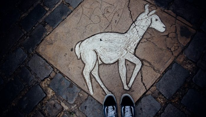 A stone inset of an alpaca on the ground at the Witches Market in La Paz