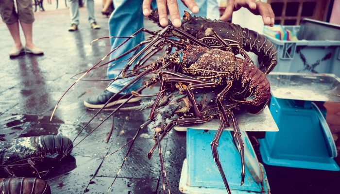 Fresh caught crayfish on sale at a market