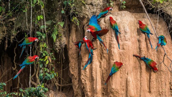 Ecuador Amazon