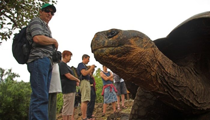 January is a good time to visit the Galapagos Islands for spotting wildlife