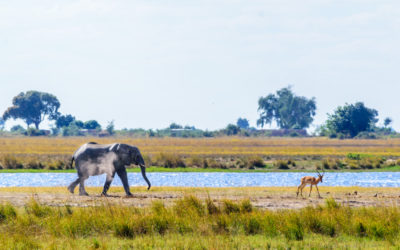 Wildlife in Chobe National Park, Botswana