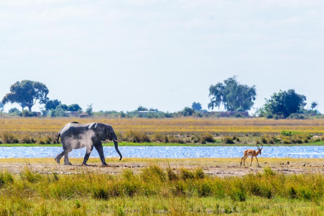 Wildlife in Chobe National Park, Botswana
