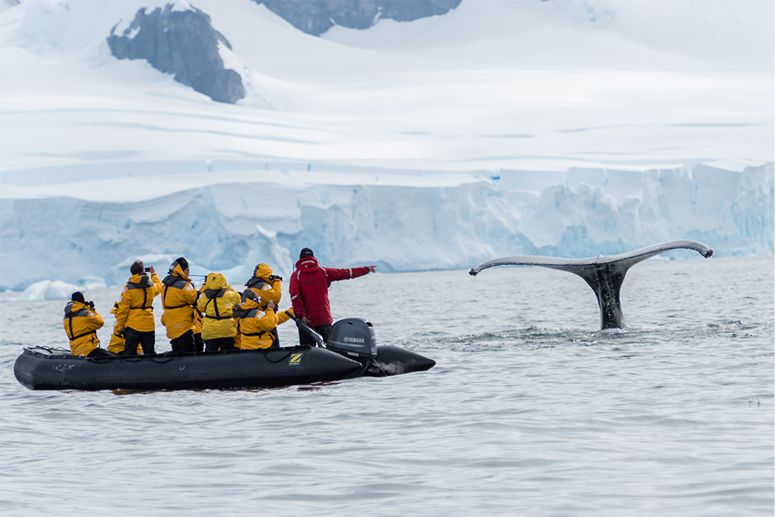 Whale tale in Antarctica.