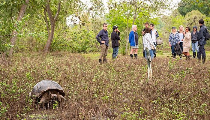 Giant tortoise and travellers in Galapagos