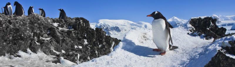 Antarctica-penguins-group-rocks