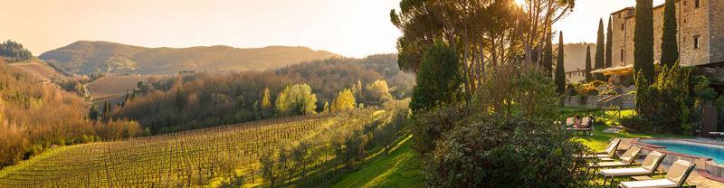 Golden vineyard at sunset in Castello