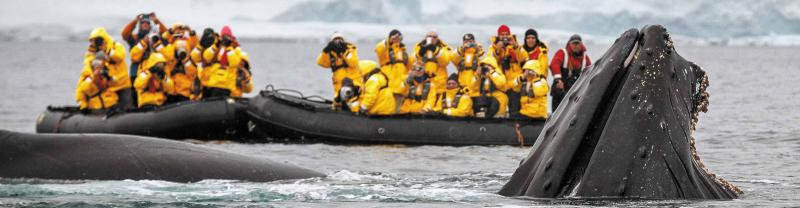 antarctica_zodiac_whale