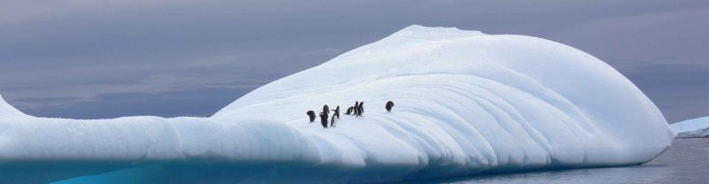 penguins_ice-panorama