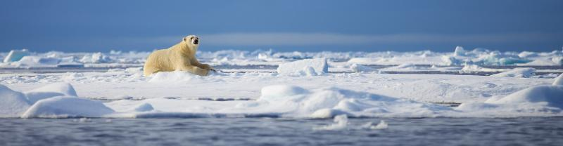 PPPA_Spitsbergen-Photography_polar-bear_banner