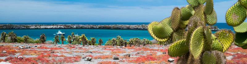 cactus plants by the ocean