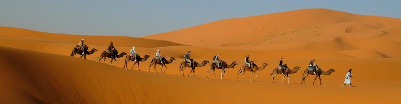 Peregrine Adventures morocco desert dunes camels row