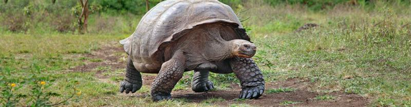 Galapagos Tortoise Walk