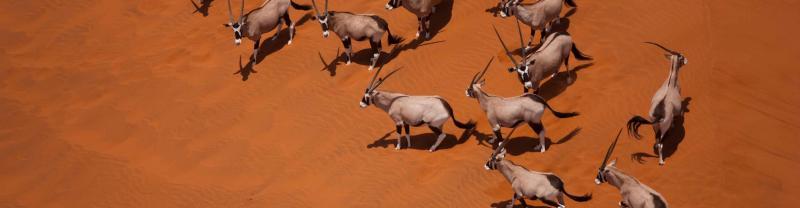 Namibia Oryx Desert Aerial