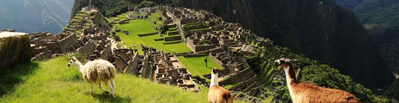 Llamas Peru Machu Picchu Incan ruins