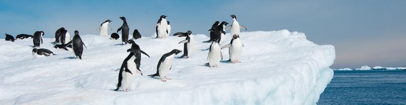 Antarctic Peninsula tours will have you witnessing local wildlife