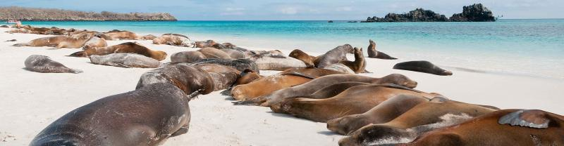 Seals relaxing on a beach, Galapagos Islands
