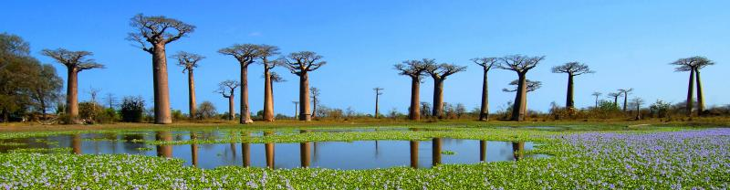 Madagascar Baobab trees lake