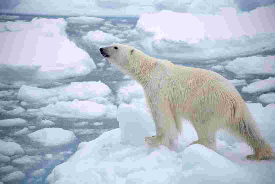 Arctic Tours, Holidays & Group Travel | Peregrine Adventures