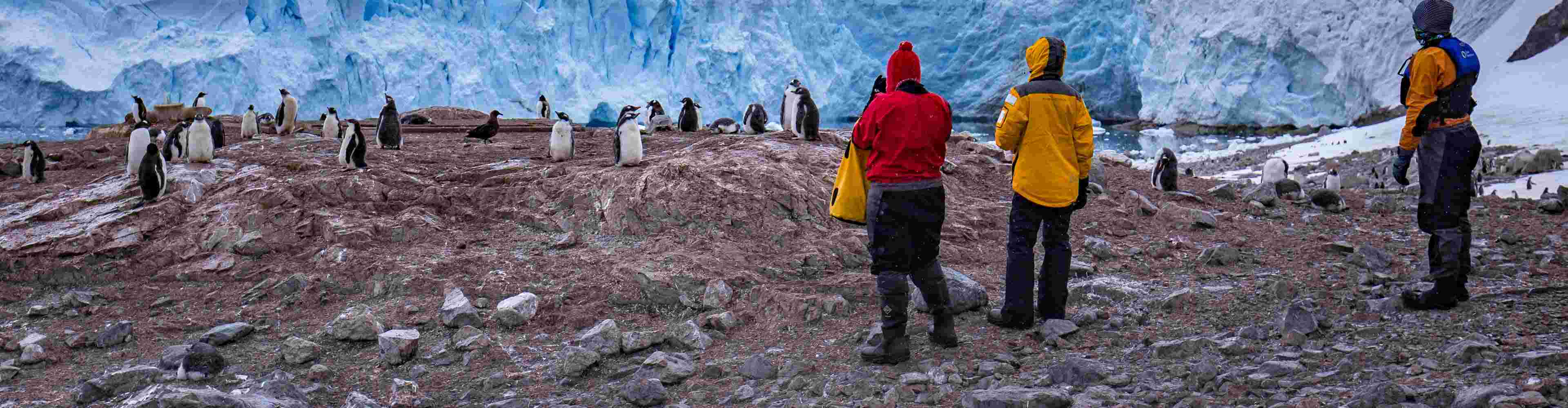 Christmas Cruise Expedition Antarctica: Endeavour
