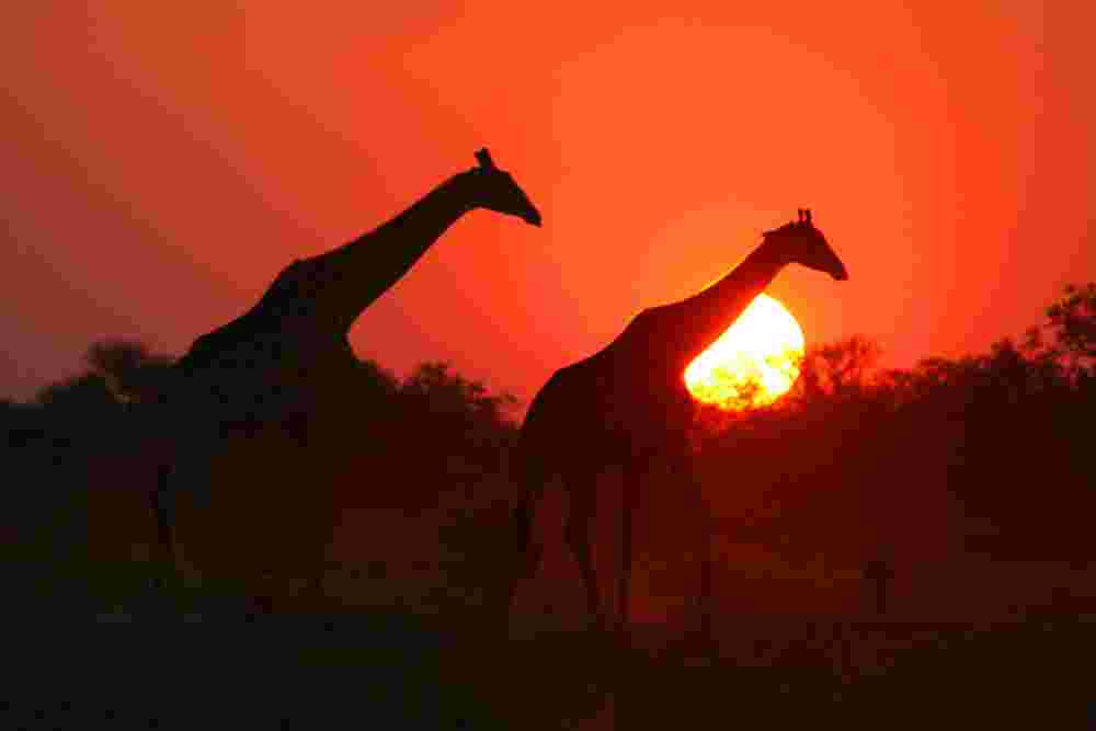 Classic Africa Safari overview | Classic Africa Safari