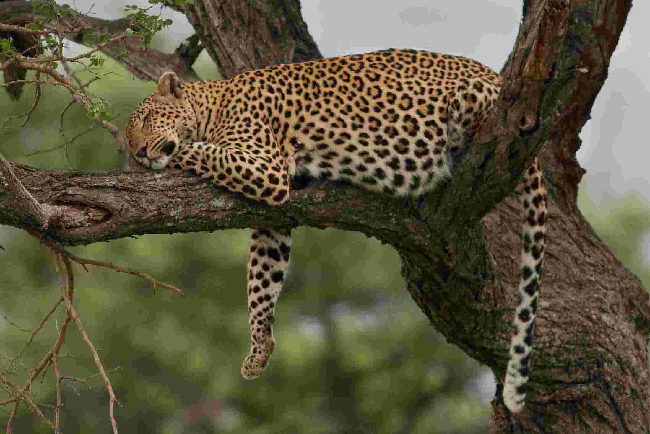 botswana tours travel trips peregrine adventures ca